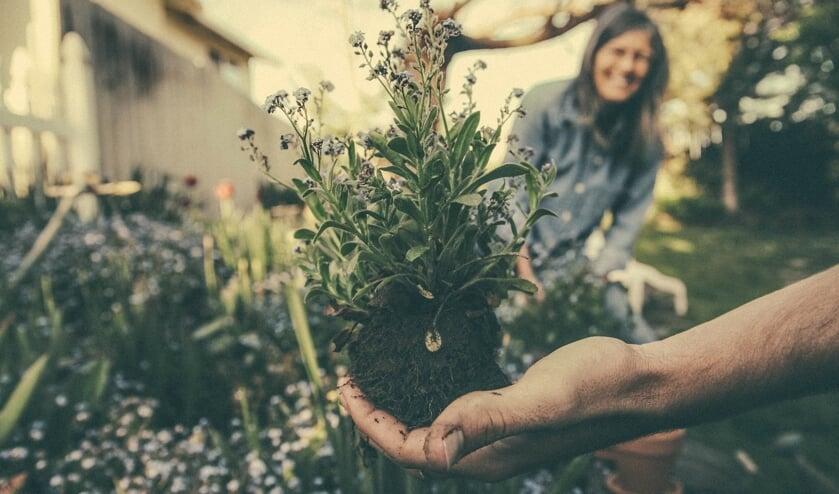 De handen gaan uit de mouwen in een Maatvast-locatie tuin.