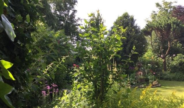 In de tuin van Cees en Tiny Tensen zijn veel diverse hoekjes verwerkt.