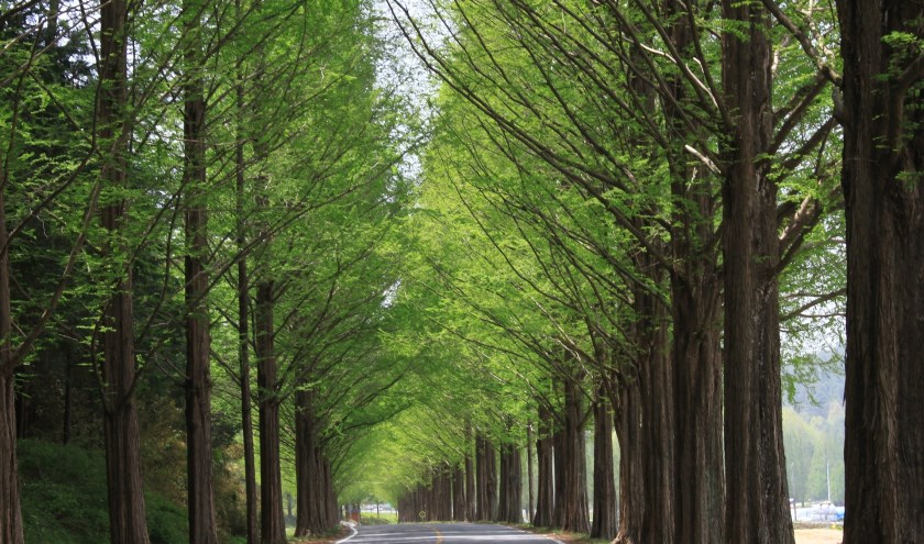Bomen worden vervangen voor duurzamere bomen.