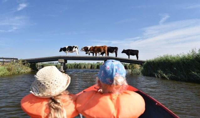 Eén van de inzendingen van vorig jaar: Eilandspolder nabij Driehuizen.