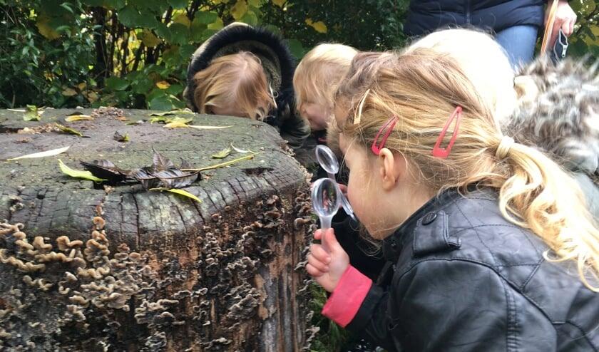 MAK Blokweer is op zoek naar iemand die het leuk vindt om samen met kinderen in de dieren- en plantenwereld actief op ontdekking te gaan.