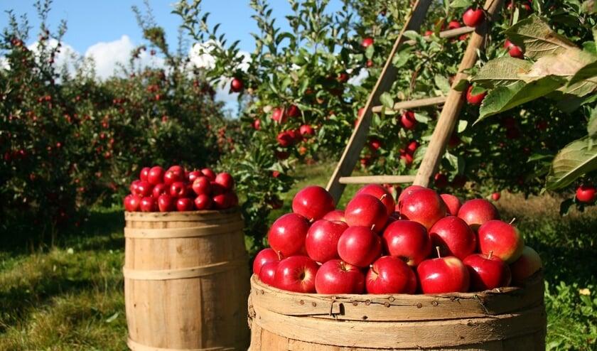 Appels spelen een grote rol tijdens het Oogstfeest. Zo komt er een grote sap-pers die ter plaatse appels perst.