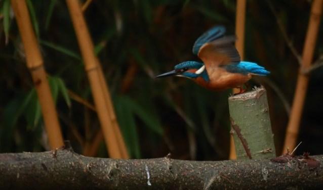 De vogels zingen het hoogste lied in de Doornduyn.