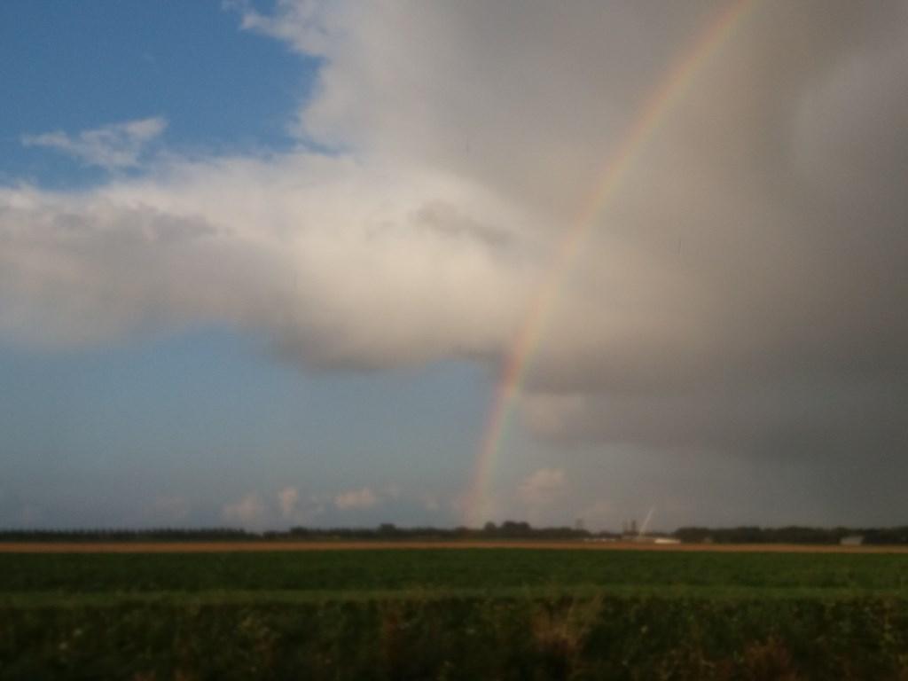 De regenboog boven de polder.  (Foto: Jeannette Lebbink) © rodi