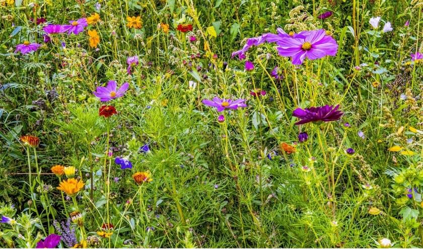 Een kleurrijke bloemenweide.