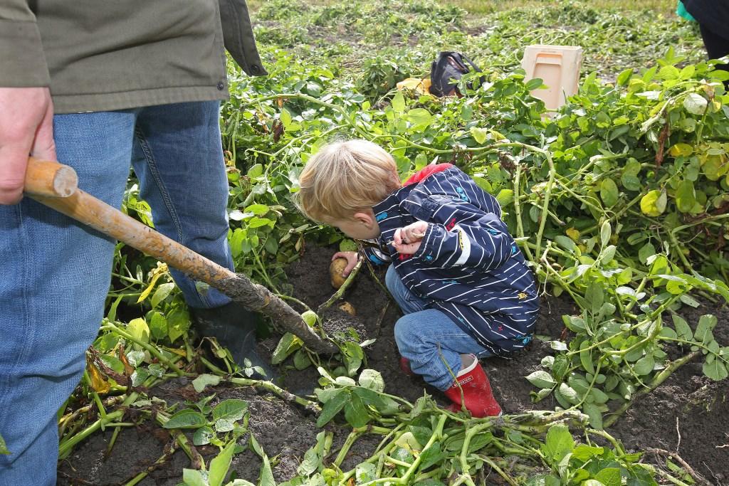 Papa helpt een handje.  (Foto: Rowin van Diest) © rodi