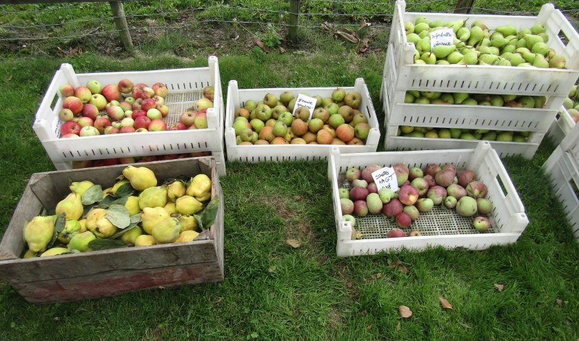 Oude fruitsoorten uit Wognumse 'boogerds' te koop bij het Huis van Oud.