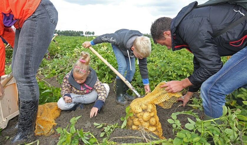 Samen met papa en mama aardappels rooien.