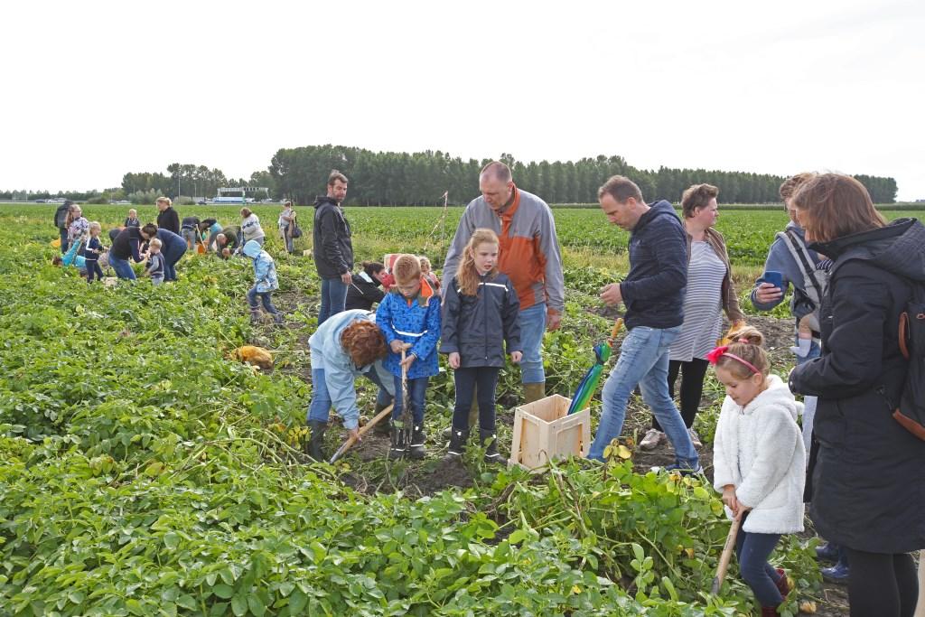 Grote drukte op het aardappelveld in de Parklanden.  (Foto: Rowin van Diest) © rodi