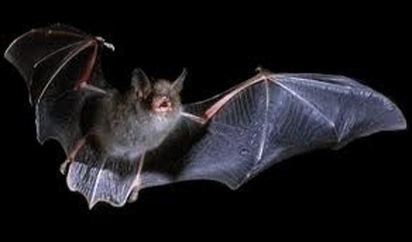 De gids vertelt over het nachtleven van een vleermuis.
