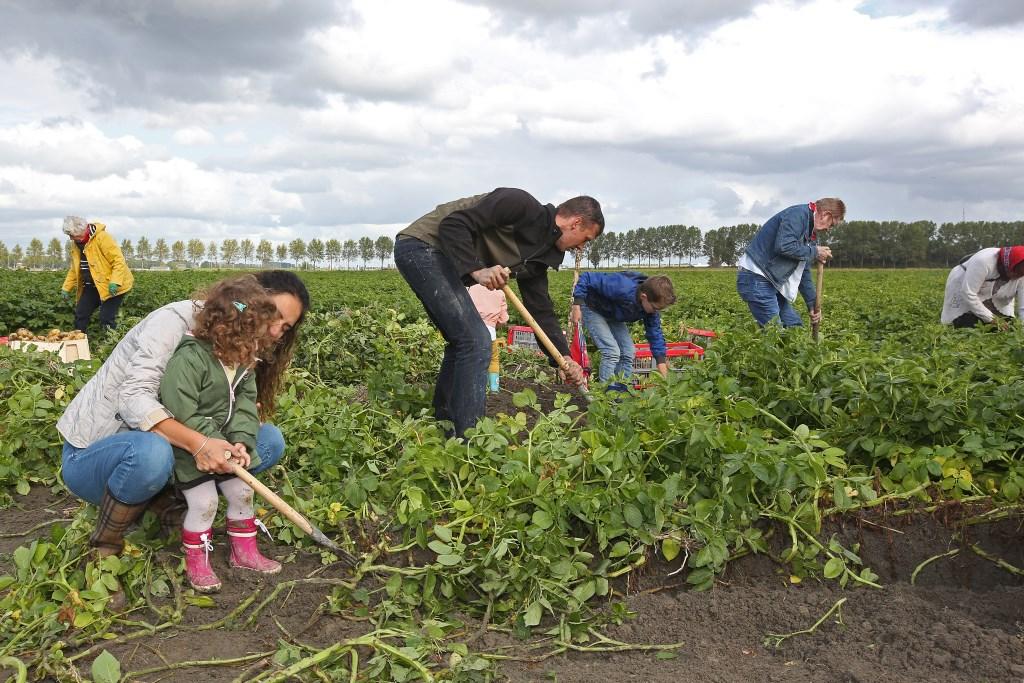 Jong en oud vermaakt zich bij het rooien van aardappelen.  (Foto: Rowin van Diest) © rodi