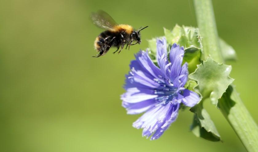 Tijdens de eerste Open Stal Zondag wordt aandacht geschonken aan insecten.
