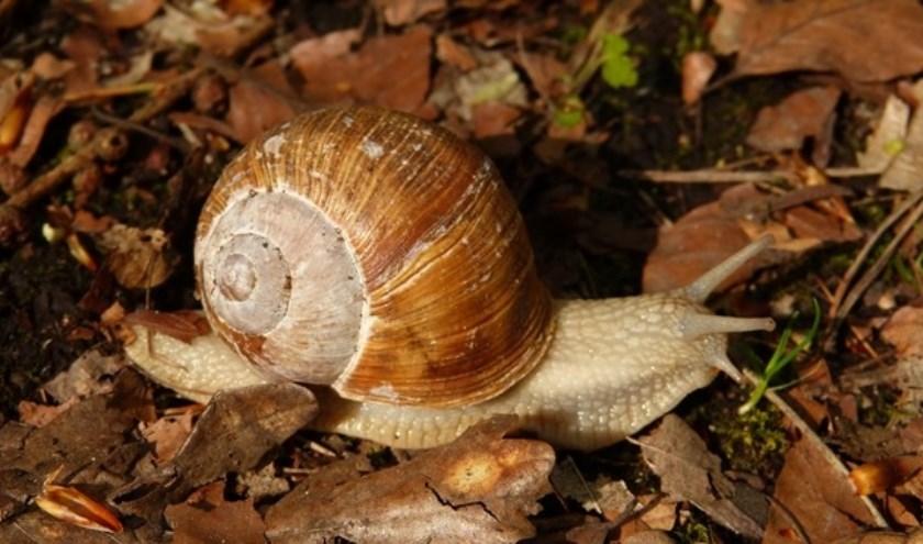 Slakken zoeken bij Helderse Vallei
