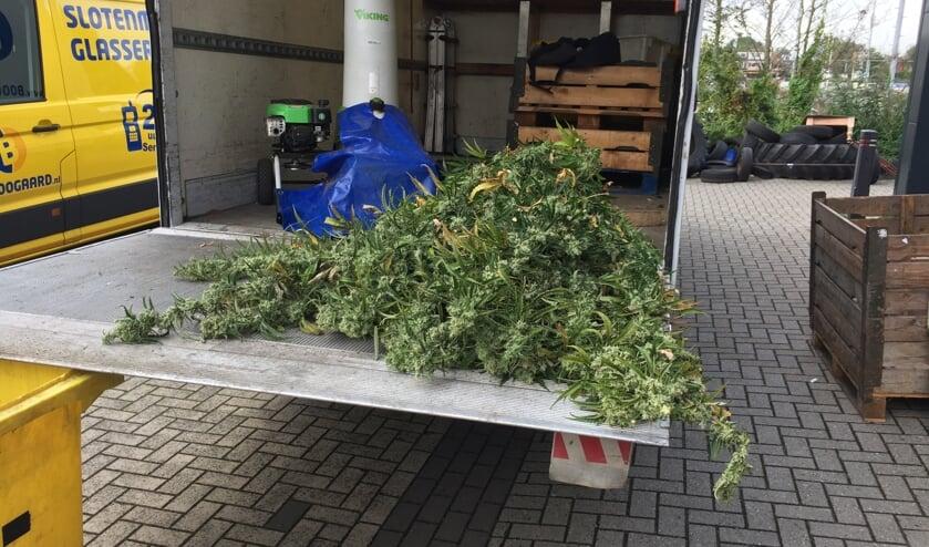 Een klein deel van de buit. In totaal werden 900 planten uit de panden gehaald.