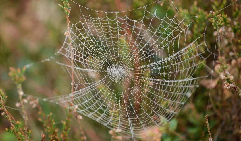 Word een ware spinnendeskundige.