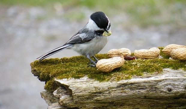 Zoektip van de week: vogels kijken.