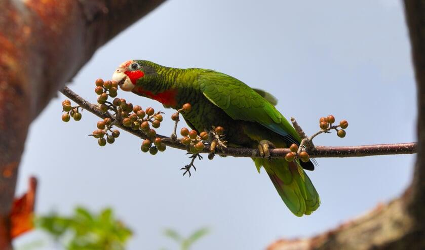 Genieten van de vogels op de Kaaiman Eilanden.
