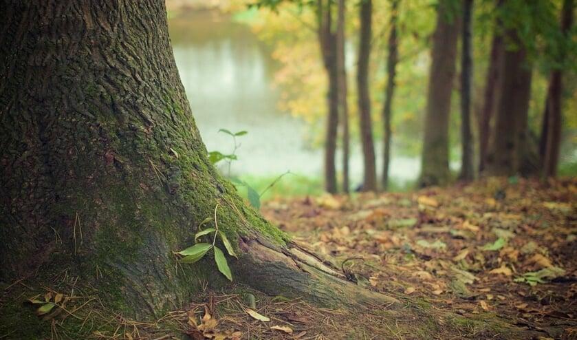 Na afloop zijn de deelnemers veel wijzer geworden over bomen.