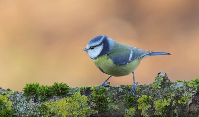 Spiksplinternieuw Workshop tuinvogels herkennen   Drechterland ZH-32