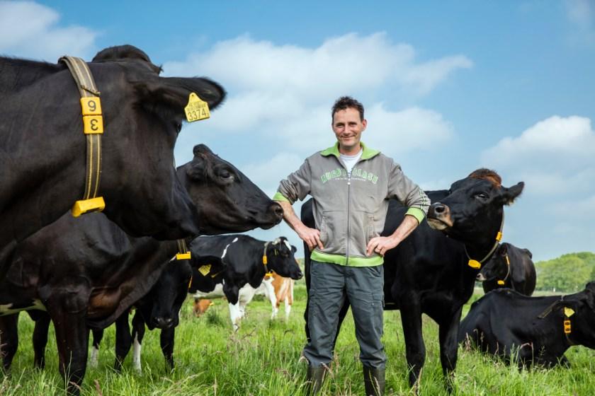 Sjaak Hoogendoorn tussen de koeien.