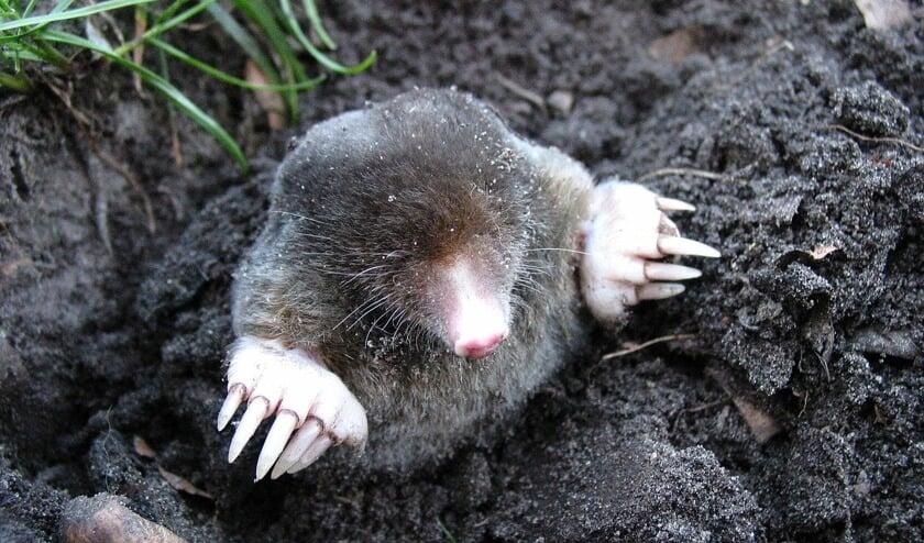 Elke dieren- en plantensoort heeft een grondsoort waar hij het liefst op leeft.