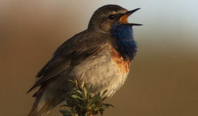 De vogelcursus is begin maart maar nu al kan men zich er voor opgeven.