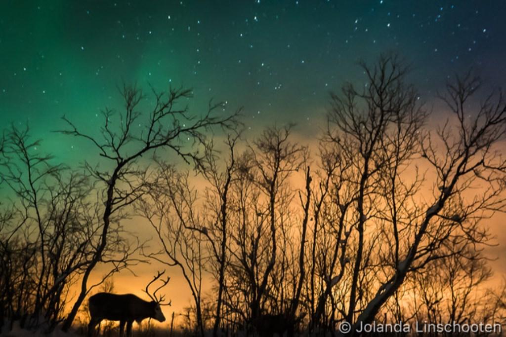 (Foto: Jolanda Linschooten) © rodi