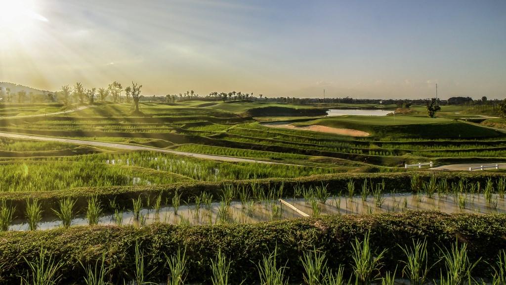 Alpine Golf Resort met een hole die midden tussen de rijstveld ligt.  © rodi
