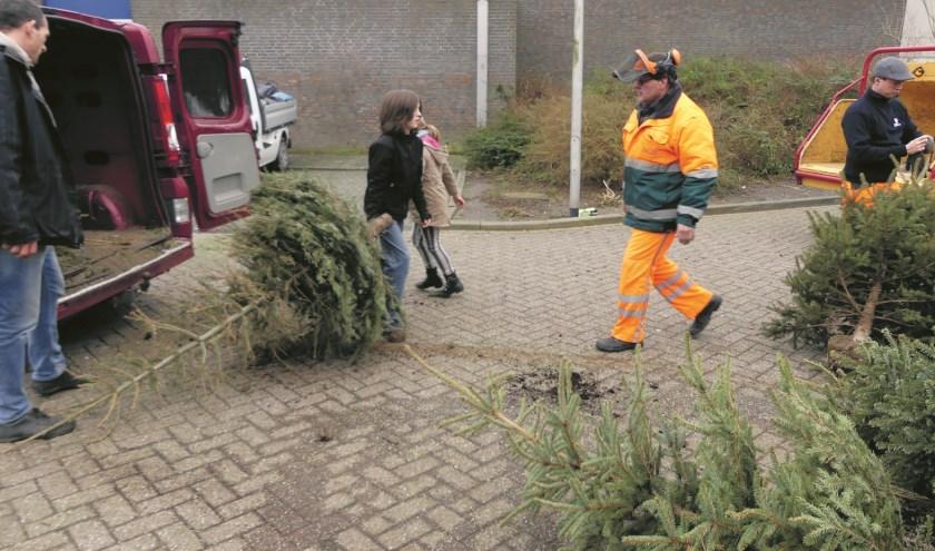De kerstbomen kunnen na de feestdagen in Uitgeest op verschillende plekken worden ingeleverd.