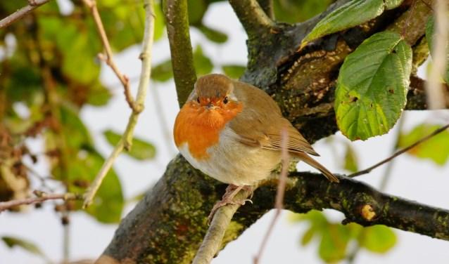 's Winters is het voor vogels lastiger om voedsel te vinden. Kom bij MAK Blokweer zelf vogelvoer maken!