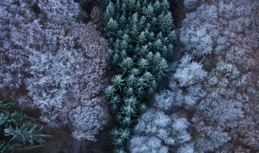 Veel kerstbomen zijn al opgehaald. Toch kunnen ze 11 januari nog worden ingeleverd op het Hemmeland.