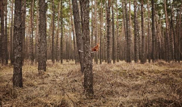 <p>Een eekhoorn steekt zijn middelvinger op, dit is een &nbsp;van de absurdistische beelden die te zien zijn op NDSM-werf. </p>