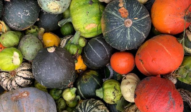 <p>Kom meer te weten over het telen van biologische groenten.</p>