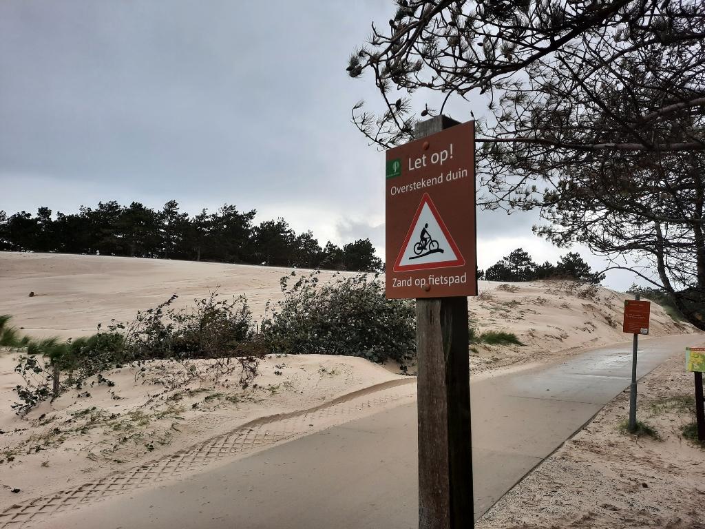 Op zoek naar de balans tussen zand en bos <p>Foto: Ed Bausch</p> © rodi