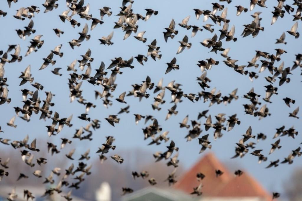<p>Ook vragen de organisaties wederom aandacht voor de vogeltrekroutes. </p> ((Foto: Landschap Noord-Holland )) © rodi