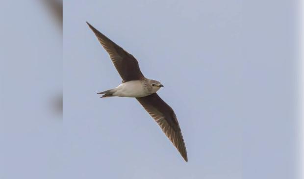 <p>De vogel komt onder meer voor in Oekra&iuml;ne</p>