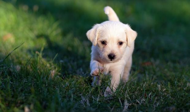 <p>Er zijn nepbrieven in omloop over hondenoverlast&nbsp;</p>