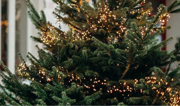 <p>Kerstdiner in eigen tuin.</p>