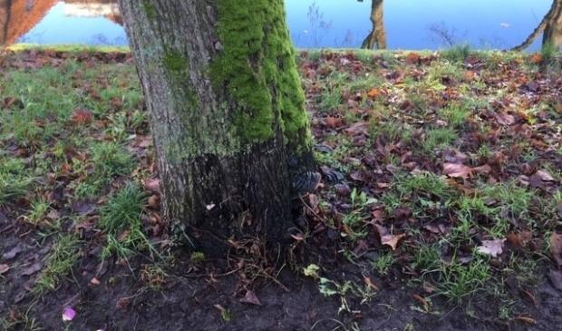 <p>Diverse bomen in de gemeente worden de komende tijd ge&iuml;nspecteerd.&nbsp;</p>