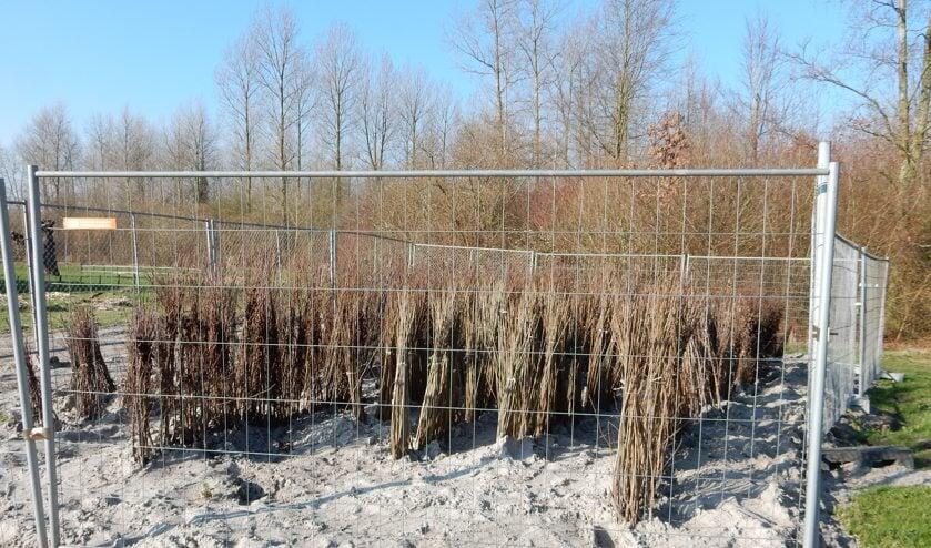 In de Waarderhout worden nieuwe bomen geplant.