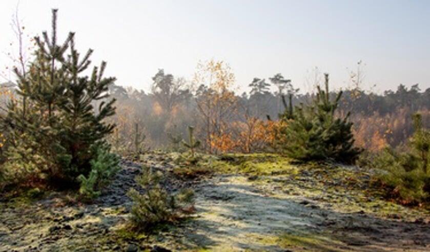 Beleef de natuur op een bijzondere manier met een Natuurbelevingsconcert in het Buitencentrum Schoorlse Duinen