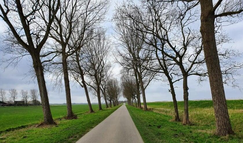 De Wieringerrandweg waar nu nog de populieren staan.