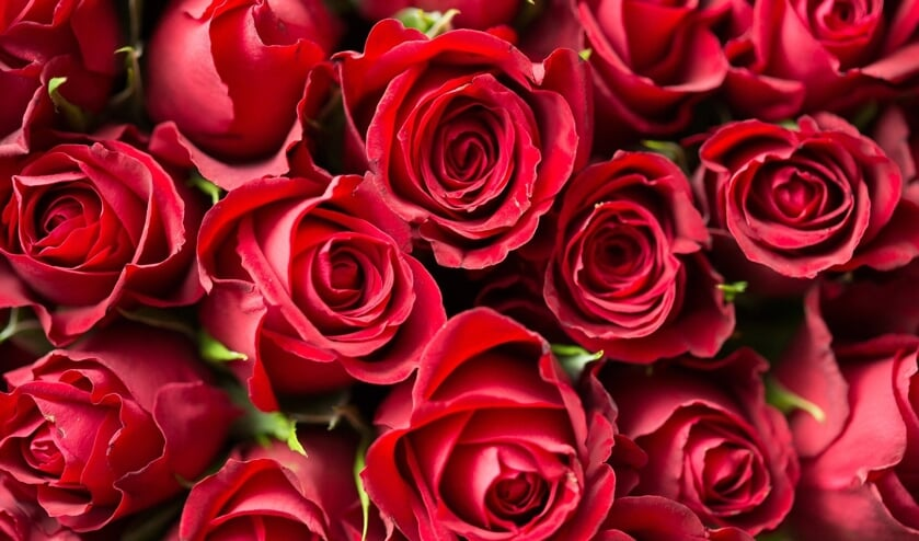 Rozen zijn favoriet op Valentijnsdag.