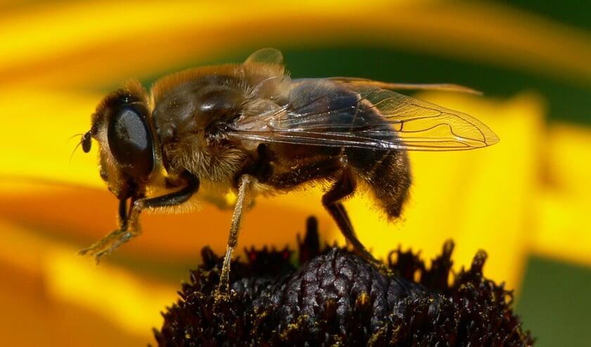 Zweefvliegen worden vaak verward met bijen, wespen en hommels.