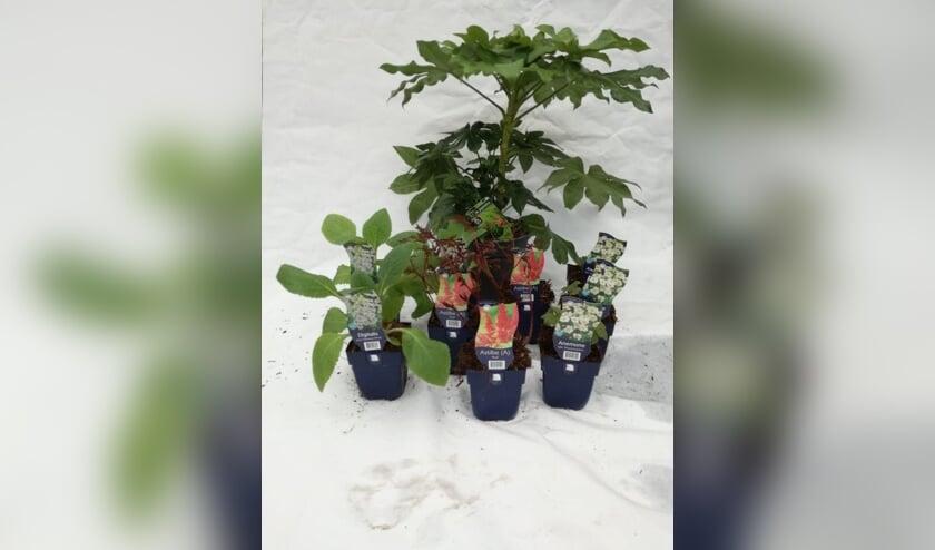 Tuincentrum De Boet stelt graag planten voor u samen. Mee te nemen  bij een speciaal afhaalpunt.