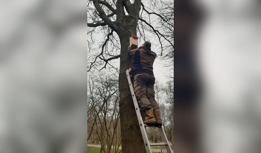 De kastjes hangen bij eikenbomen.