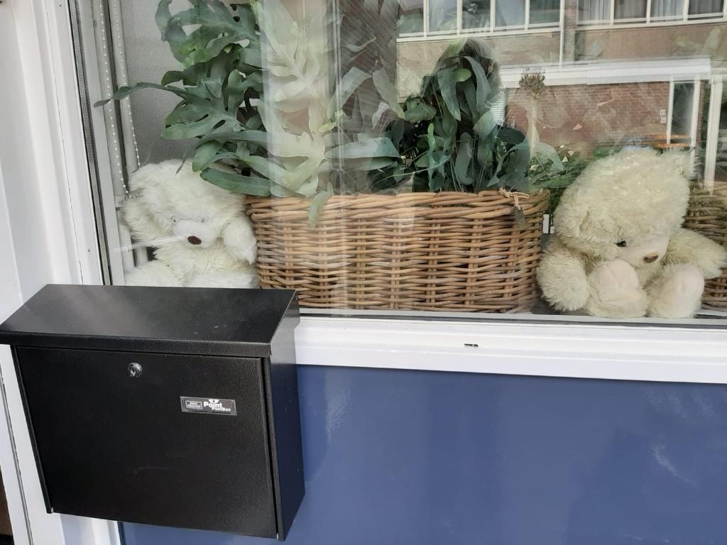 Beren voor het raam tijdens berenjacht in Schagen. (Foto:  Lisette Blokker) © rodi