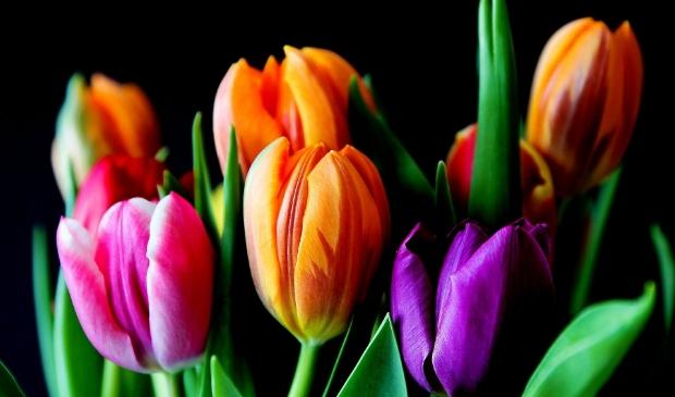 Bewoners van drie verzorgingshuizen krijgen tulpen aangeboden.