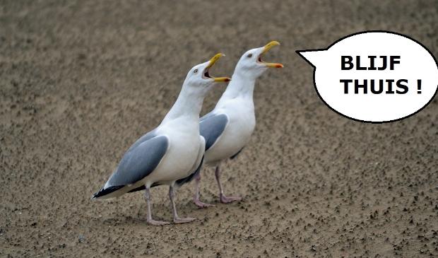 Sjef: ''Het lijkt er op dat er hier in Egmond aan Zee naar deze meeuwen geluisterd wordt.''