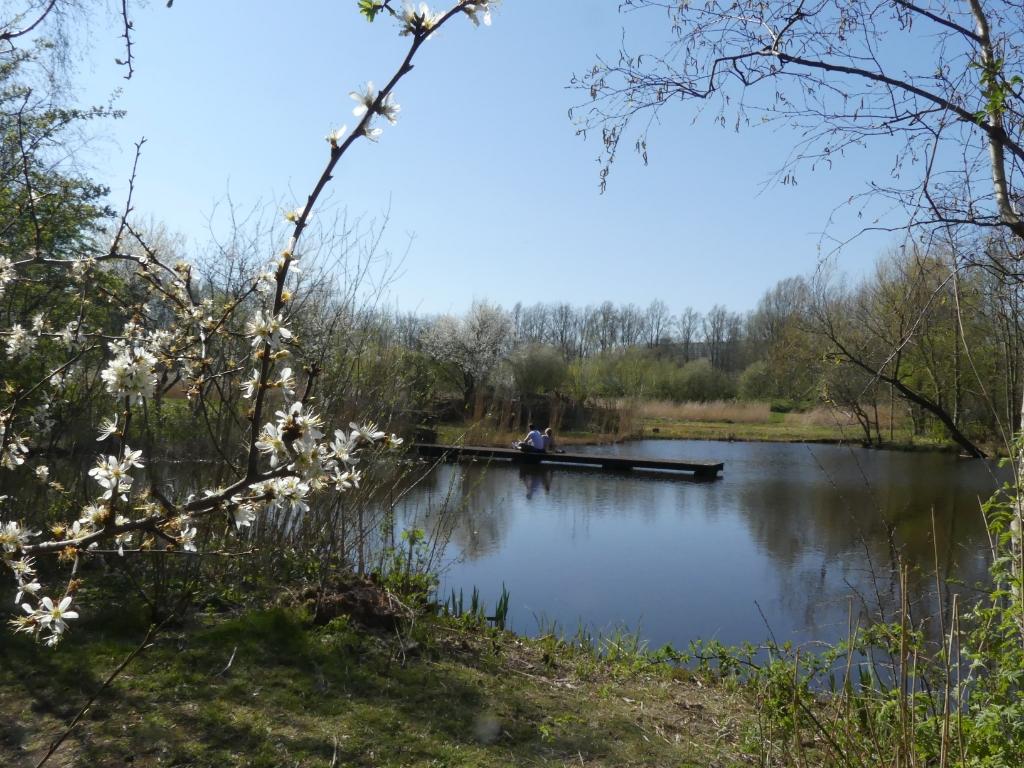 De tuin geeft een goed beeld van de in Waterland voorkomende landschappen. (Foto: Cees Bandt) © rodi